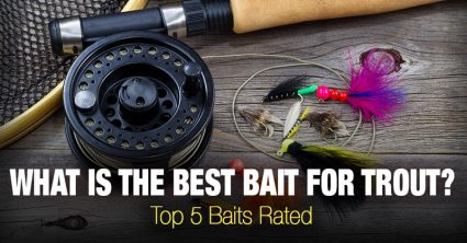What is the best bait for trout? Top 5 Baits Rated