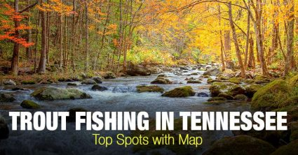 Trout Fishing in Tennessee (TN) – Top Spots with Map