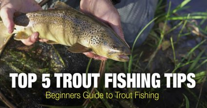Trout Fishing Tips: Beginners Guide to Trout Fishing