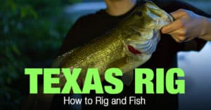 Texas Rig Fishing: How to Rig and Fish