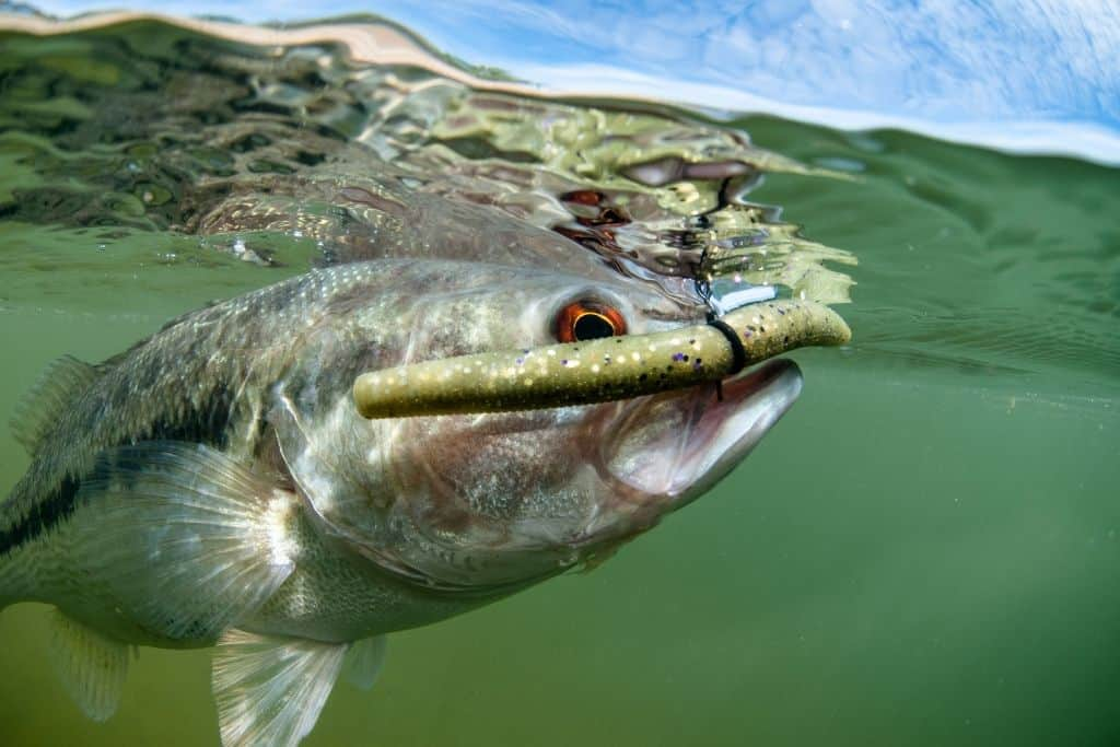 Best Line Weight for Bass Fishing